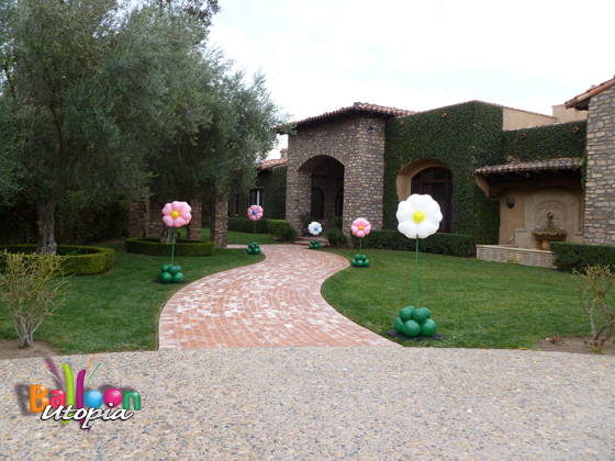 Balloon Flowers can be perfect addition to even the most beautiful settings